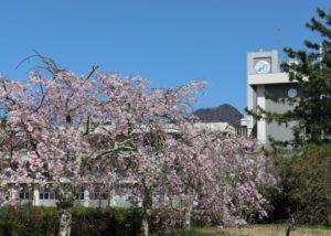 校内風景(令和3年4月9日)